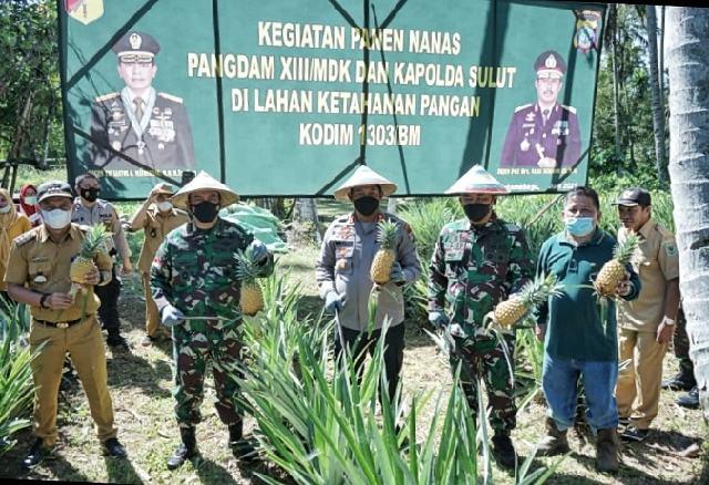 Pangdam XIII Merdeka dan Kapolda Sulut Panen Nanas di Desa Bulud