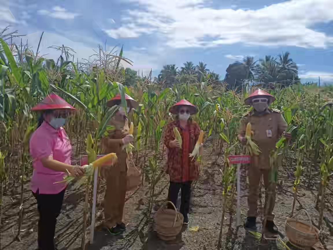Di Bawah Kepemimpinan Yasti, Pemkab Bolmong Terus Dorong Pengembangan Sektor Agribisnis