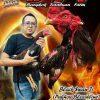 Beternak Ayam Bangkok Sebagai Hobbi Yang Menghasilkan