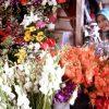 Bunga Milik Warga Mongondow Ini Ikut Hiasi Lapak Pasar Senggol
