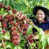 Pengembangan Agrowisata Kopi Berpotensi Tambah PAD