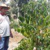 Papa Da', Warga Poybes Yang Kembangkan 21 Ribu Pohon Kopi Aceh