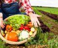 Kotamobagu Fokus Kembangkan Potensi Pertanian Organik