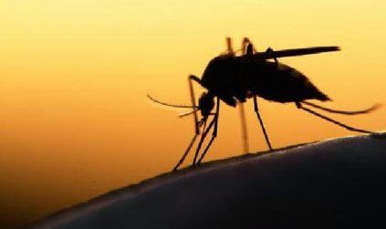 Kasus Malaria di Bolmong Semuanya 'Impor'